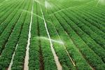 بخش کشاورزی در دوران تحریم روی پای خود ایستاد