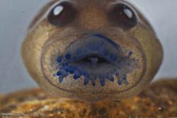 نامتعارف ترین تصاویر حیوانات در سال 2016