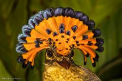 تصاویر برگزیده جامعه حفاظت از حیات وحش
