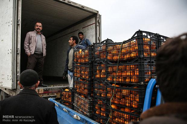 نامهربانی مسئولان در خرید مرکبات مازندران
