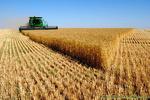 خرید تضمینی گندم در کشور آغاز شد