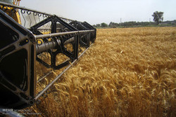 Iran dispatches 1st wheat cargo to Oman