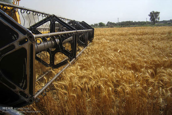 Wheat self-sufficiency to continue