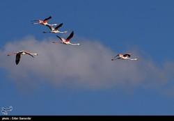 Wintering birds in Iran