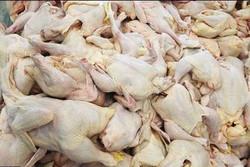 یک هزار تن گوشت مرغ در چهارمحال و بختیاری توزیع می شود