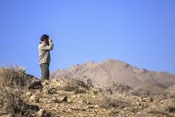 سرشماری پائیزه حیات وحش استان تهران امروز به پایان میرسد