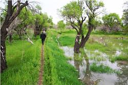 سالانه ۱۰ میلیارد تومان به باغداران زنجانی خسارت وارد می شود