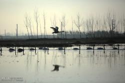 درخواست ورود معاون دادستان کل کشور به موضوع کشتار پرندگان