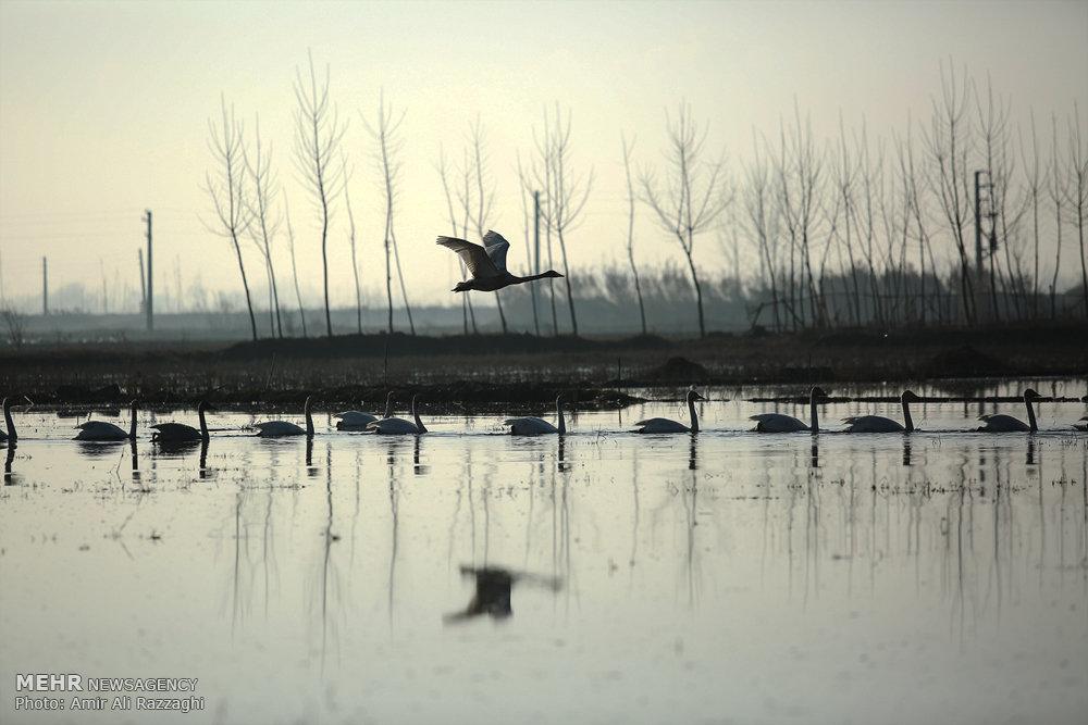 مقصد نهایی پرندگان مهاجر؛ از بشقاب «فسنجان خوتکا» تا باغ پرندگان