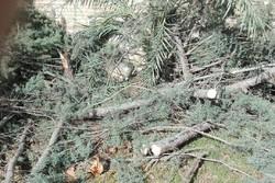 برخورد با متخلفان قطع درخت / عدم صدور مجوز ساخت و ساز برای ملک