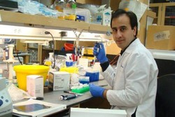 Researchers unravel molecular basis of Perlman syndrome