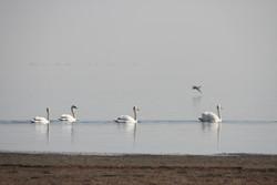 بهشت پرندگان مهاجر میخشکد/ روزگار برزخی یک تالاب