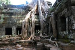 پەرەستگە ڕەمزاوییەکانی کامبوج