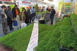 نمایشگاه دستاوردها و صنایع کشاورزی در میناب افتتاح شد