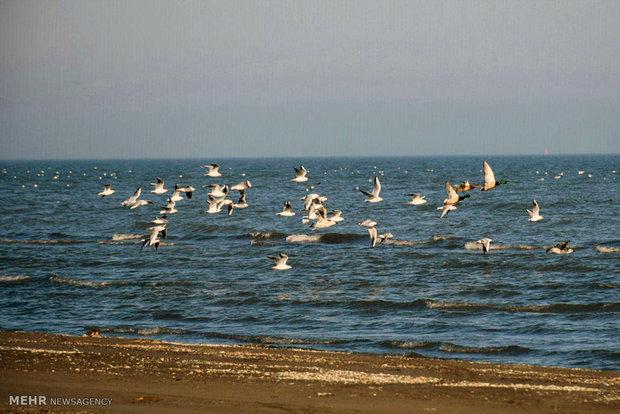 Migrant birds arrive in Astara