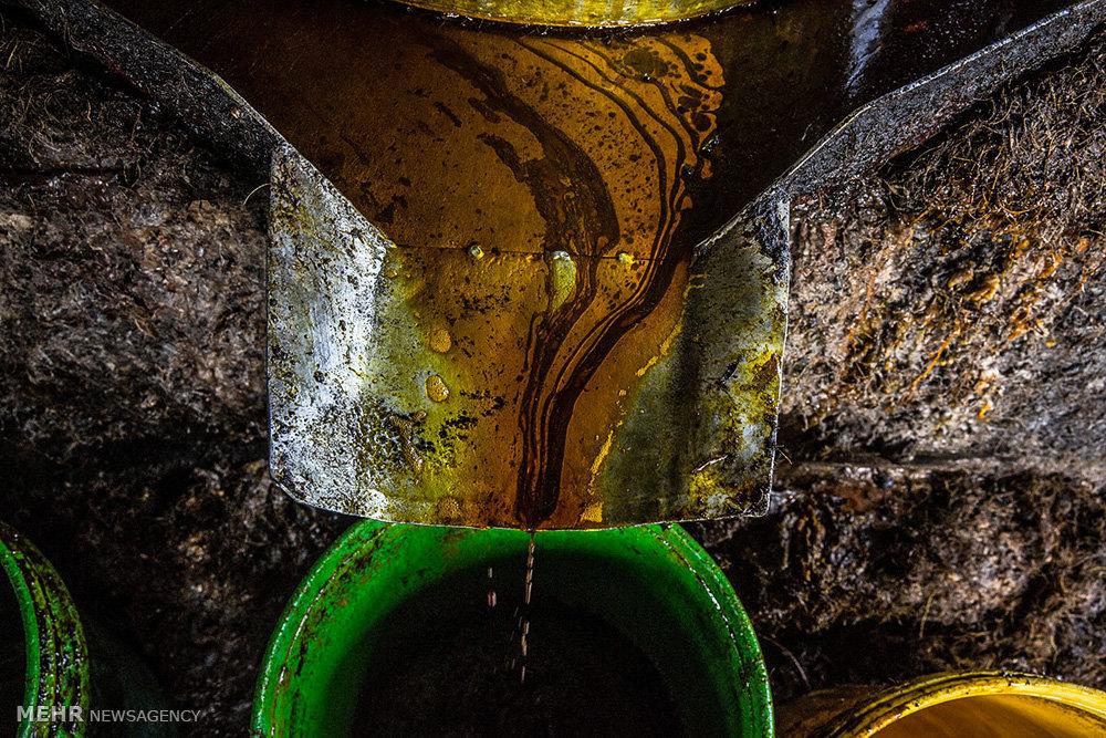 تولید روغن پالم در میانمار
