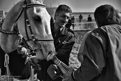 مسابقات کورس اسب دوانی قهرمانی کشور در مشهد