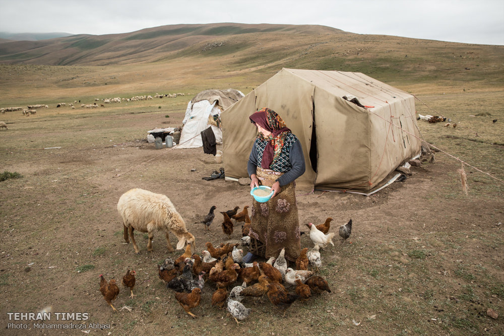 Tehran Times - Shahsavan nomads, inhabitants of green ...