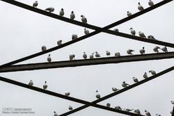 """نهر """"كارون"""" محطة للطيور المهاجرة /صور"""