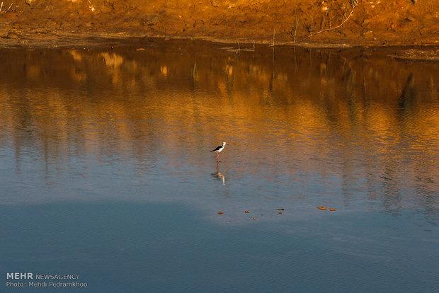 """نهر """"كارون"""" محطة للطيور المهاجرة"""