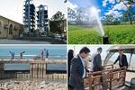 افزایش سرانه فضای سبز شهر بوشهر/ ایجاد پارکینگهای مکانیزه