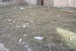 فضای سبز معابر و پارک های شهر شادگان درحال تحول است