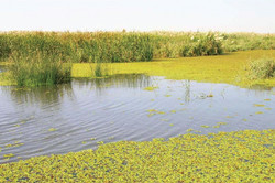 A wetland in Iraq