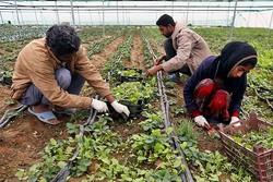 برنامه های توسعه اقتصادی روستاهای استان  زنجان آغاز شده است