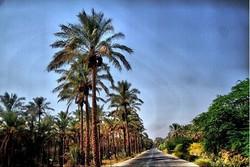 تکمیل پروژه آبیاری نوین در نخلستانهای دشتستان تسریع شود