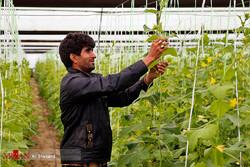 Iranian entrepreneur