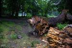 چوب لای چرخ تنفس جنگل/ تبصرههایی که جای سوء استفاده را باز می گذارد