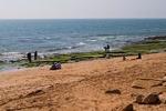 شناسایی جلبکهای مضر خلیج فارس با ماهواره سنجش از دور