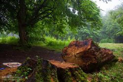 تعبیر وارونه«هرخانه یک درخت»/ سرانه فضای سبز مازندران ۳ متر است