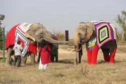 پوشاندن فیل ها از سرما در هند