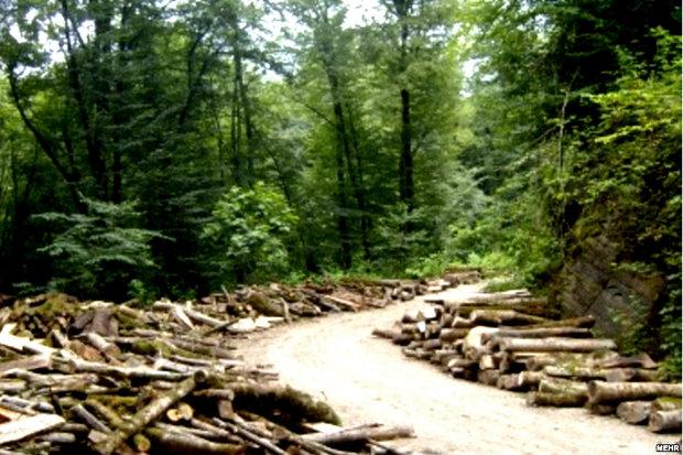 راهی جز واردات چوب نداریم/آلودگی ۴۰ هزار هکتار از شمشادستان ها