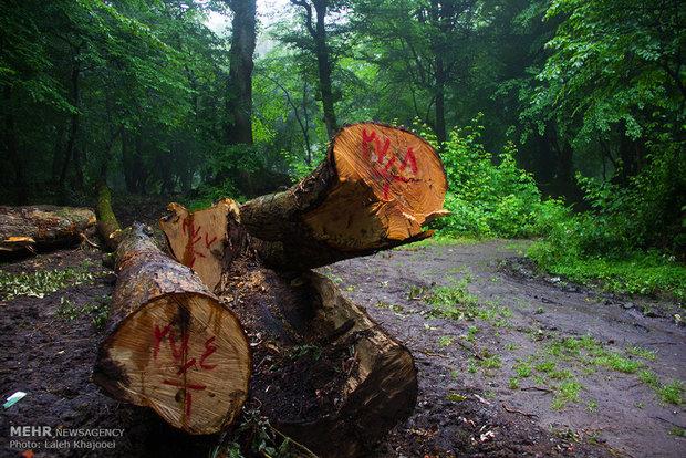 قاچاق چوب در طارم زیاد است