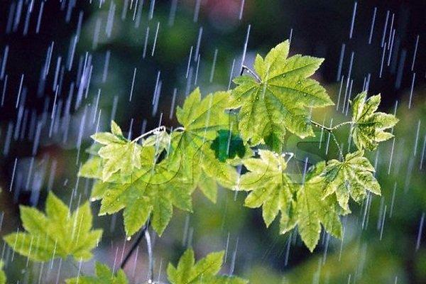 بارش باران