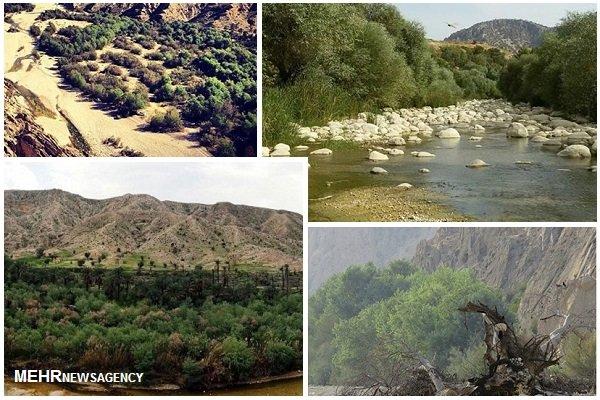 مرگ تدریجی گلوبردکان/ نابودی جنگل در سایه غفلت مسئولان