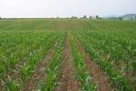 ۳۸۰۰ هکتار از اراضی کشاورزی دیم لرستان آبی میشود