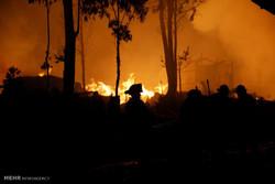 طرح جامع مقابله با حریق در جنگلها و مراتع تدوین شد