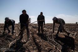تمام کارگران هفت تپه آزاد شدند/یک ماه حقوق معوق کارگران پرداخت شد