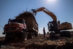 شرکتهای هفتگانه نیشکر بدون کار کارشناسی آب کارون را می بلعند