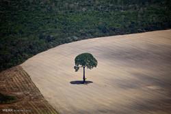 کاهش پوشش گیاهی بر کاهش بارندگی مؤثر است