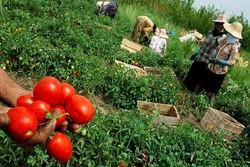 محصوولات کشاورزی