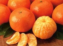 علاج قاچاق نارنگی پاکستانی؛ تدبیر یا تداوم ممنوعیت؟