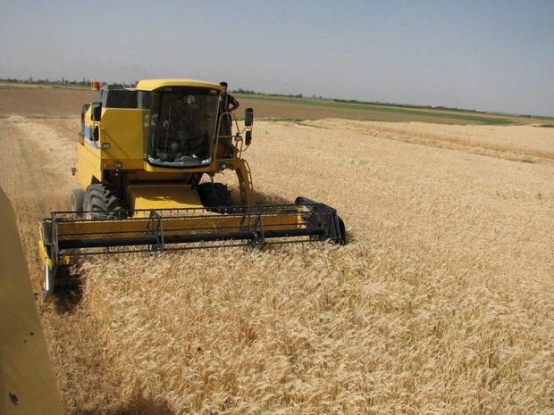 حلقه مفقوده کشاورزی در شهرستان سرپل ذهاب صنایع تبدیلی است