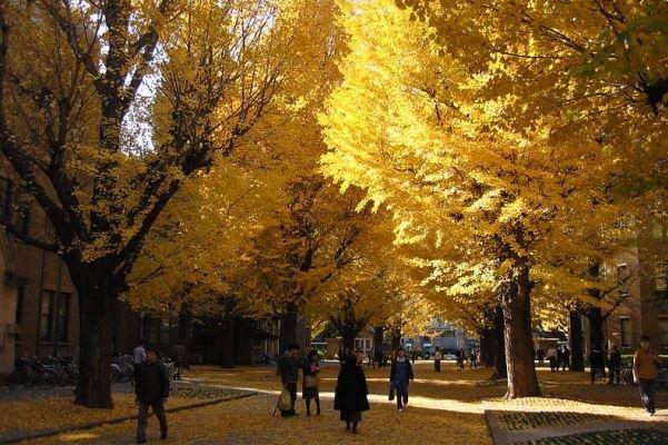 2361531 - دانشگاه توکیو مهد تحقیق در آسیا/ با دانشگاه نخست وزیران آشنا شوید