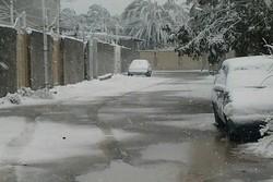 بارش برف در بم