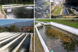 ۲۰ هزار قطعه ماهیان گرمابی در استخرهای ماهی آبیک رهاسازی شد