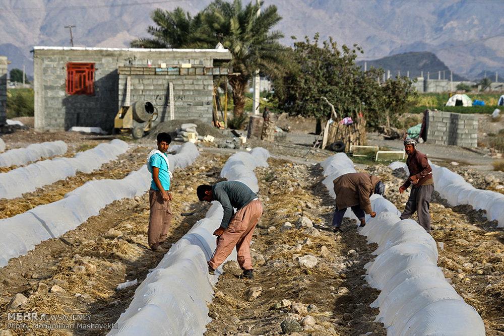شرایط وام دامداری جهاد بخشودگی جرایم وام بانکی کشاورزان ابلاغ شد - خبرگزاری مهر ...
